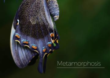 Kolekcja Metamorphosis